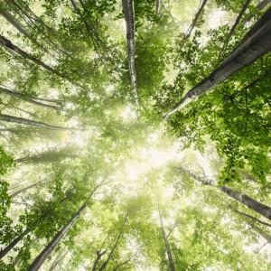 Spiritualitet – hvorfor er det så tabuiseret?